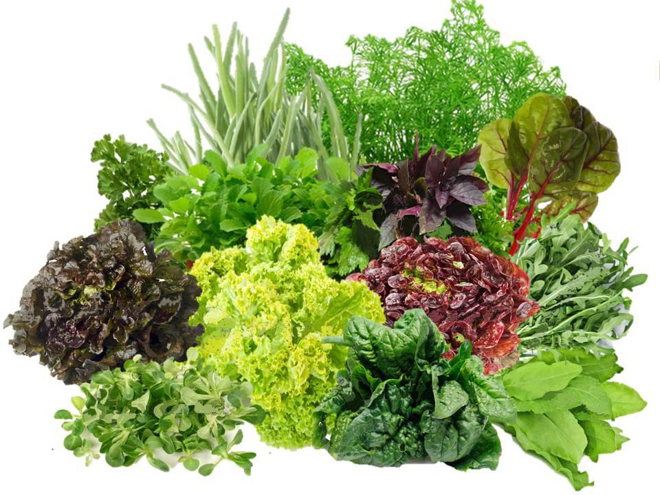 Зелень, сухофрукты и злаковые - можно есть, не опасаясь за фигуру
